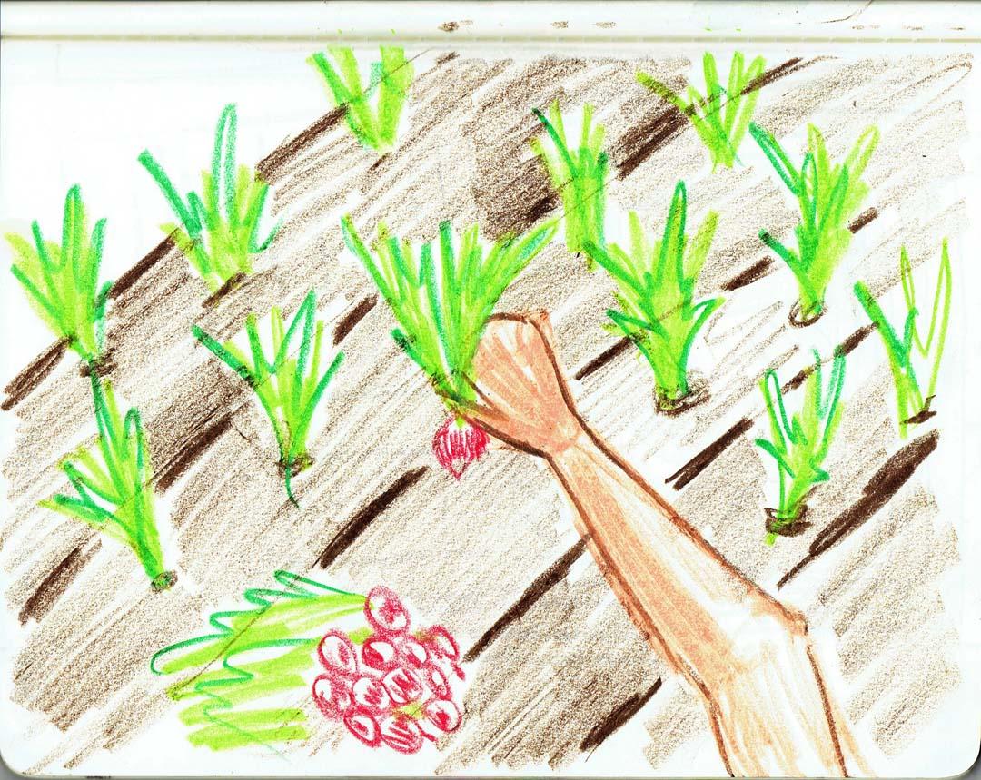 gardenconcept_11.jpg